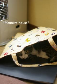 mameiro house 090427-4.jpg