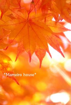 mameirohouse091016-1.jpg