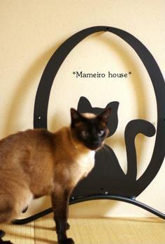 mameirohouse100409-3.jpg