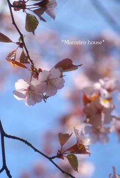 mameirohouse100515-6.jpg