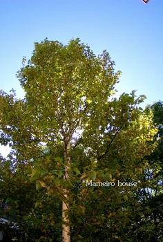 mameirohouse100917-1.jpg