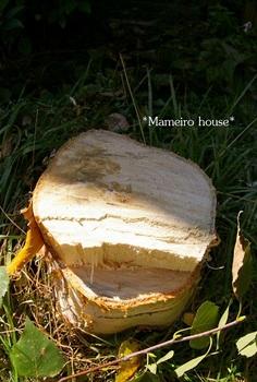 mameirohouse100917-3.jpg