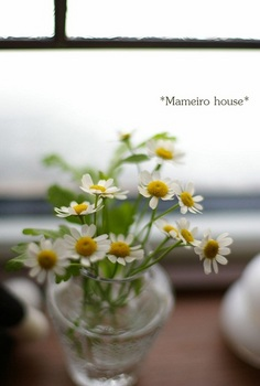 mameirohouse110113-1.jpg
