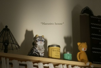 mameirohouse110113-4.jpg