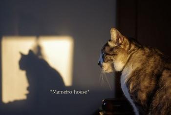 mameirohouse110228-10.jpg