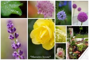 mameirohouse110704-3.jpg