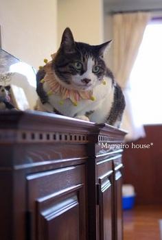 mameirohouse131226-1.jpg